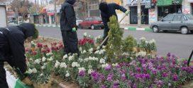 با کاشت گلهای نوروزی شهر تایباد، حال و هوای بهار را بخود گرفت.